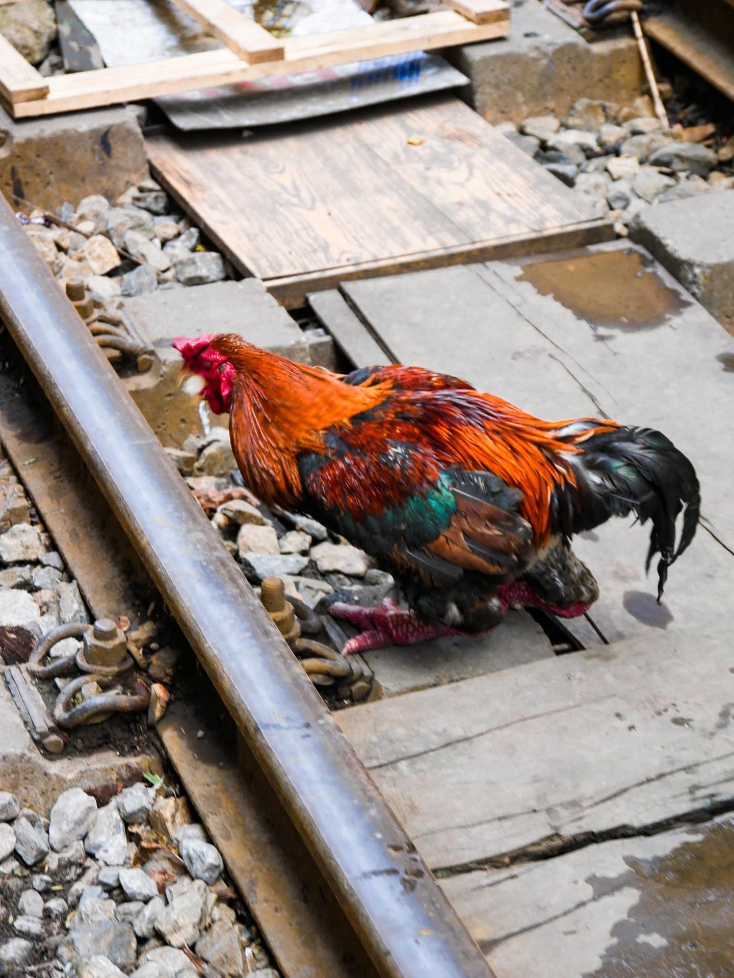 vietnam rue du train